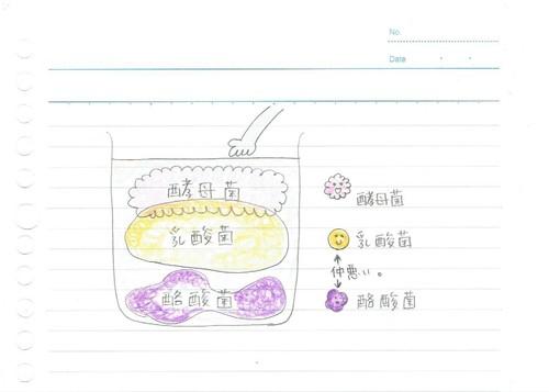 糠床の菌の図.jpeg